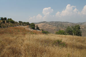 land for sale trachypedoula